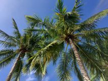 Tropical Florida Day. Palm Trees in sky royalty free stock photos