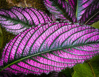 Tropical Flower. S from the island of Hawaii Stock Image