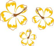 Tropical flower. Hibiscus flower in format very easy to edit vector illustration