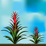 Tropical Flower Background Stock Image