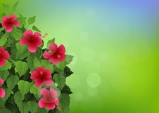 Tropical flower background Stock Photography