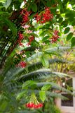 Tropical Flower Background Royalty Free Stock Photo