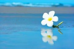 Tropical flower on the beachv Stock Image
