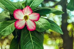 A tropical flower blossoms in the forest stock photos