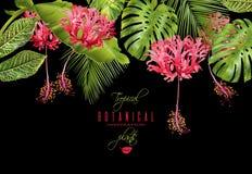 Tropical flower border Stock Image