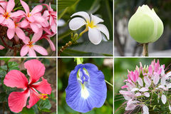 Tropical flower collection Royalty Free Stock Photos