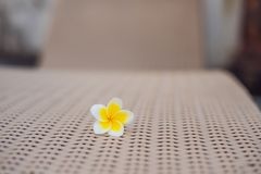Tropical flower on a deckchair. Holiday concept.  stock photo