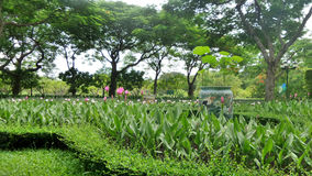 Tropical flower garden in Queen Sirikit Park Stock Photography