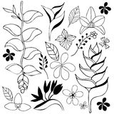 Tropical flower hand drawn sketch Stock Images