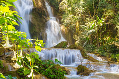 The Tropical flower at Khuang si waterfall,laos Stock Images