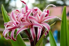 Tropical flower with leaves intertwined Stock Photos