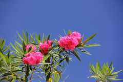 Tropical flower with leaves intertwined on tree Stock Photography
