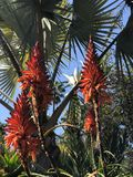 TROPICAL FLOWER IN MAJORELLE GARDEN, MARRAKESH royalty free stock photos