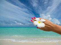 Tropical flower Plumeria on the beach. Sea background. Concept t Stock Photography