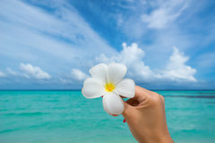 Tropical flower Plumeria on the beach. Sea background. Concept t Stock Photo