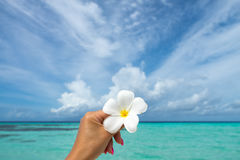 Tropical flower Plumeria on the beach. Sea background. Concept t. Ravel and vacation Royalty Free Stock Photography