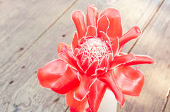 Tropical flower red torch ginger Stock Photos