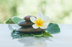 Tropical flower on thw stones with green leaves for massage room. With sunlight stock images