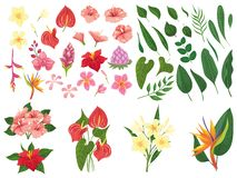 Free Tropical Flower. Tropic Forest Flowers, Exotic Tropics Plants Leaves And Flowering Branch Vector Illustration Set Stock Photography - 143490882