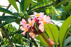 Tropical flower up . Traditional flower. Stock Images