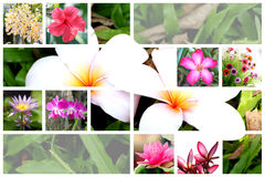 Tropical flower wide variety. Stock Image