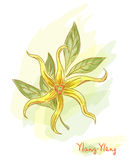 Tropical flower - ylang-ylang (Cananga). Stock Photography