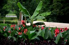 Free Tropical Flowerbed In A City Park Of Temperate Climate With A Banana Tree And Other Exotic Flora Which For The Winter Must Be Stock Images - 190631024