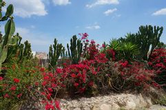Tropical flowering garden with cactus, palms and red blossoms bush. Tropical flowering garden with cactus, palms and red blossoms bush on background  blue sky Stock Image