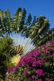 Tropical Flowers Royalty Free Stock Photo