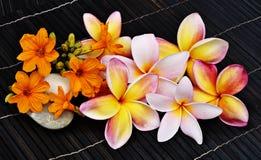 Tropical flowers. On dark background Stock Photos