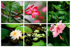 Tropical flowers stock images