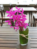 Tropical flowers. Royalty Free Stock Photos