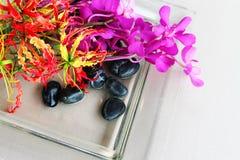 Tropical flowers Stock Photos