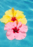 Tropical Flowers Stock Photography