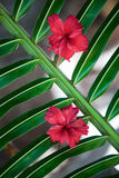 Tropical flowers background Royalty Free Stock Images