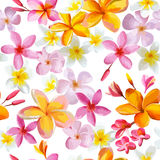 Tropical Flowers Background Stock Photos