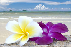 Tropical flowers on beach. Royalty Free Stock Photography