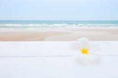 Tropical flowers on the beach Stock Photos