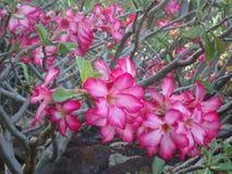 Tropical flowers. Beautiful tropical flowers  in Hawaii Stock Photo