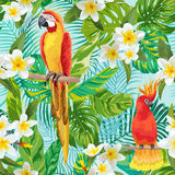 Tropical Flowers and Birds Background Stock Photos