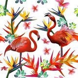 Tropical flowers and birds,seamless pattern royalty free stock photo