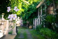 Tropical flowers on a blurred background of garden and summer house. In a Sunny morning. A beautiful place for rest and relaxation Royalty Free Stock Photos