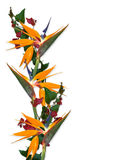 Tropical Flowers Border Bird of paradise. Image and illustration composition Floral Background Bougainvillea and bird of paradise blossoms for elegant, dramatic Stock Photos