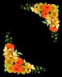 Tropical flowers border on black stock photo