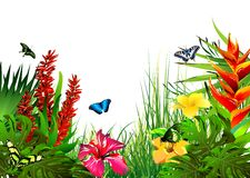 Tropical flowers and butterflies. Stock Image