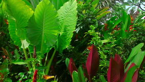 Tropical flowers. Colorful fresh tropical flowers and plants, Phuket, Thailand stock footage