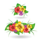 Tropical flowers decor elements Royalty Free Stock Photo