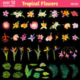 Tropical Flowers Design Elements Set. Vintage Colorful Style  - in vector Stock Image
