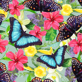 Tropical flowers and exotic butterflies. Royalty Free Stock Photo