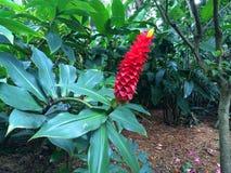 Tropical flowers. Of Florida fauna nature Stock Photos